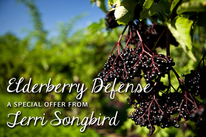Elderberry Defense, a special offer from Terri Songbird